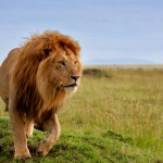 5 Things Great Parents Do: The Lion King Way